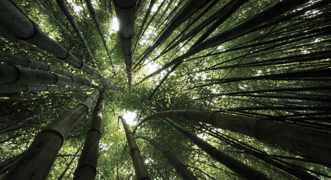 menjulang tinggi Fotografi Landscape Peringatan Hari lingkungan Hidup 10 Januari Mari Bersinergi dengan Alam