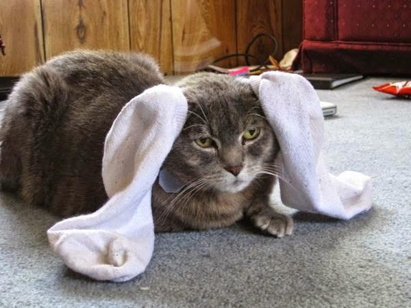 Смешной кот - Сам ты зайчик!