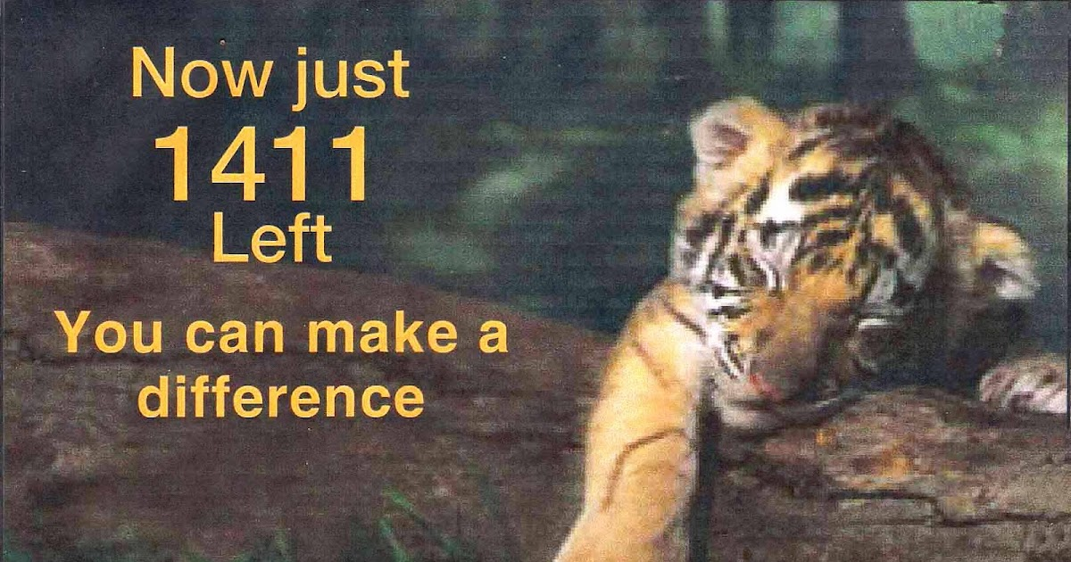 essay on save tiger campaign Save tigers save the tiger this article needs additional citations for verification  shadow spinner essay protagonist and crippled orphan storyteller.