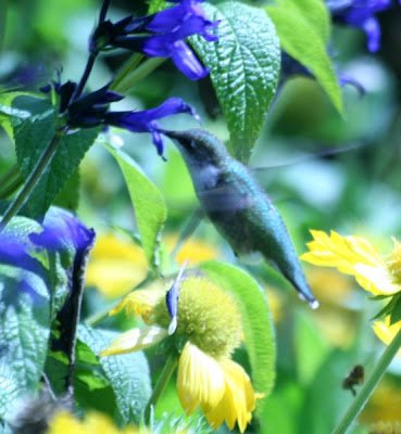 Nature walk in Royal Botanical Garden - The Hummingbird :: All Pretty Things