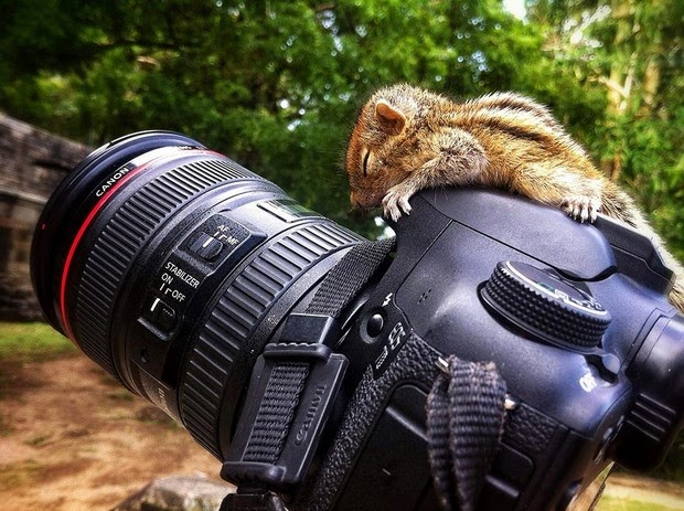 Baby Palm Squirrel Rescued By Wildlife Filmmaker 3