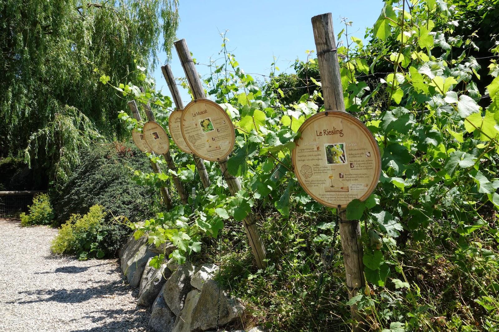 Парк Аистов-виноградник