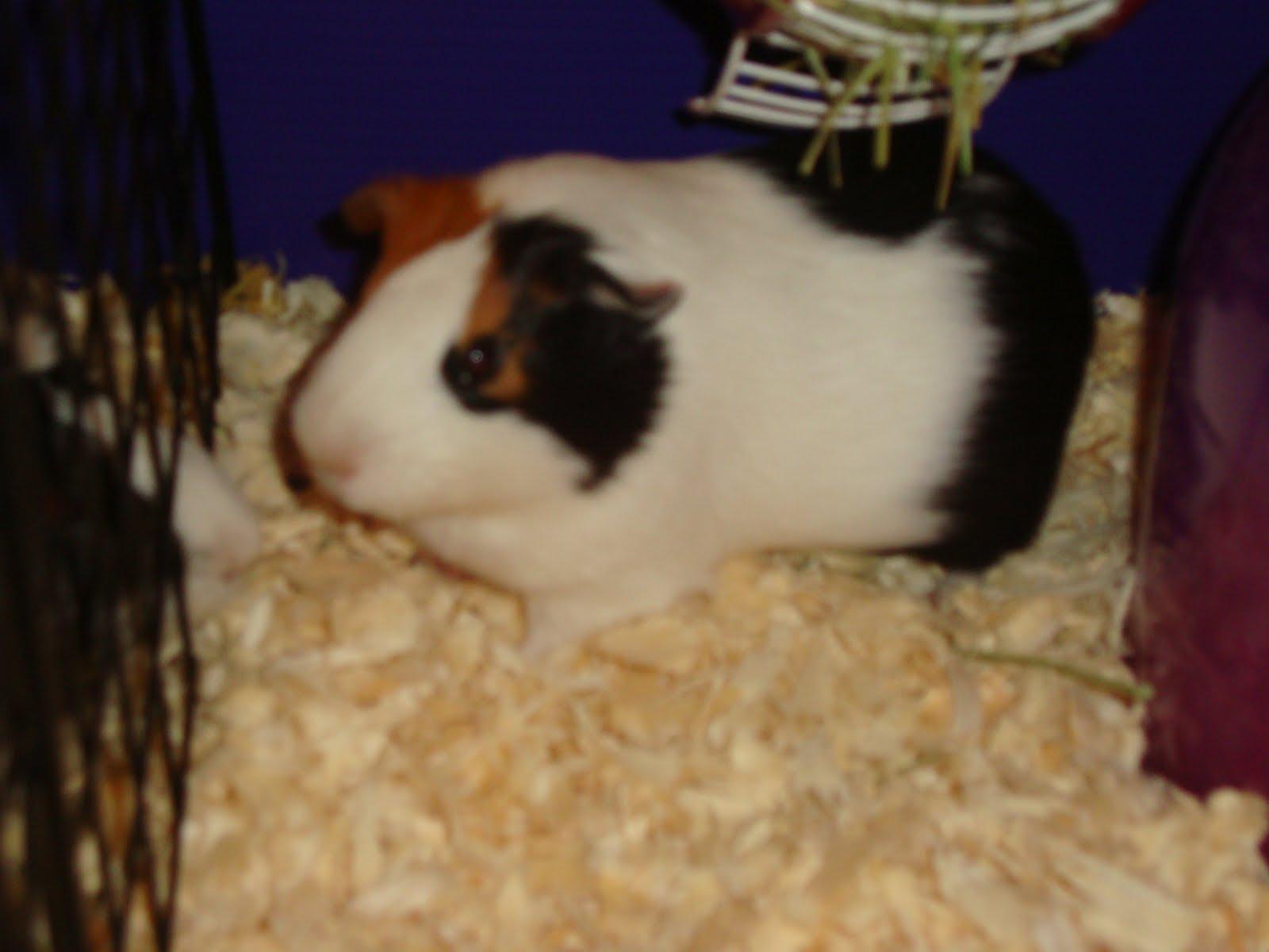 kayla guinea