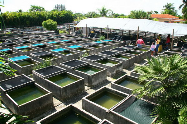 Do your homework better and faster for Fish farming at home