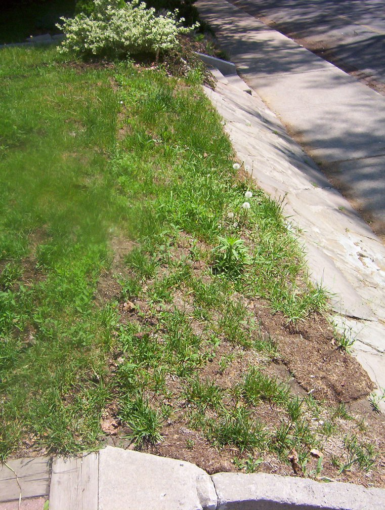 Strathcona Ave. front slope before Paul Jung Gardening Services Toronto