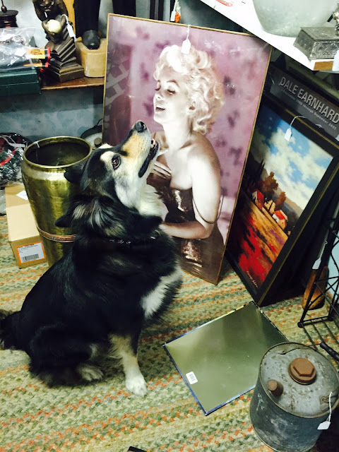 Scranberry coop marilyn monroe with our own joey badenov at scranberry coop antiques
