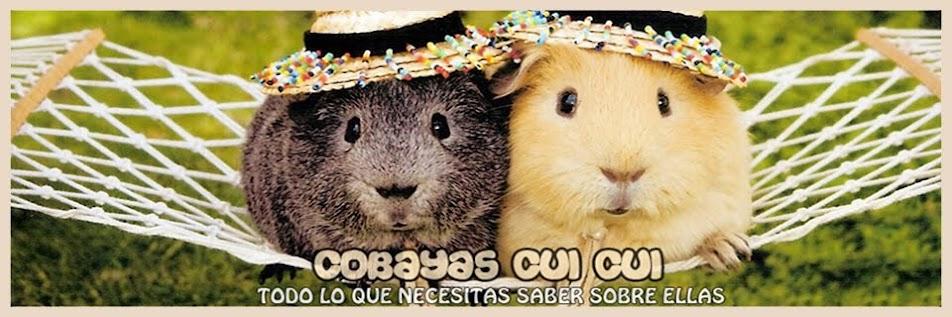 Cobayas CuiCui