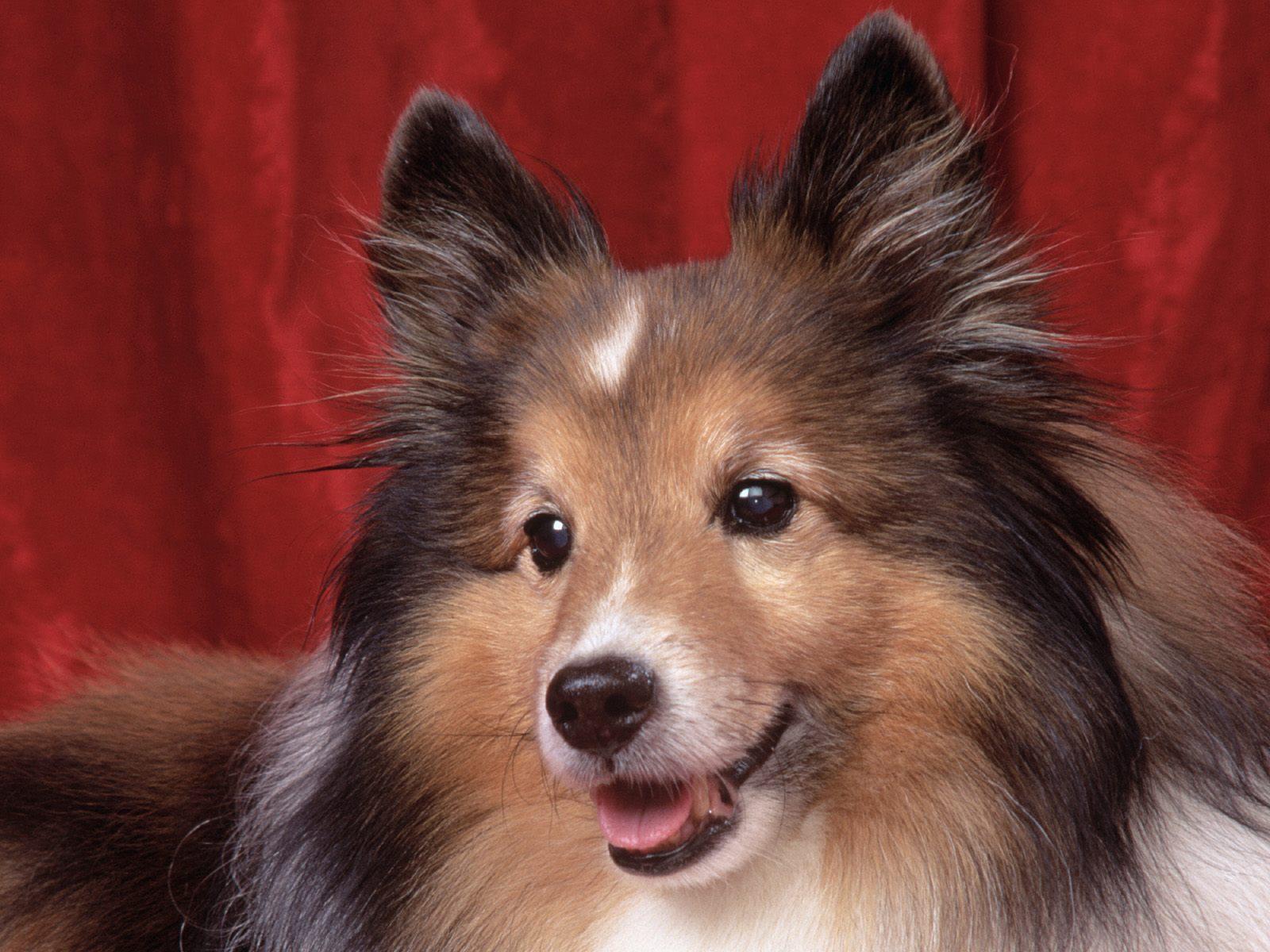 http://4.bp.blogspot.com/-QDcwoSDZ7lM/Tp-3hM8qYuI/AAAAAAAAAg4/LX7GnrCNdDE/s1600/Cute-Dog-Lovely-Picture.jpg
