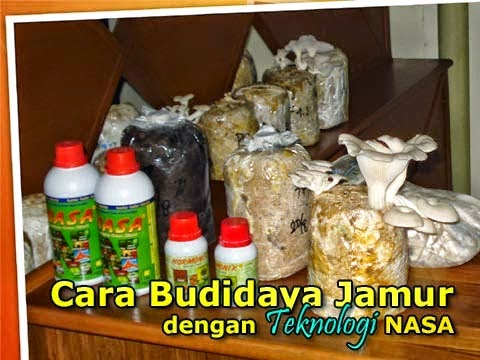 cara-budidaya-jamur-dengan-produk-nasa