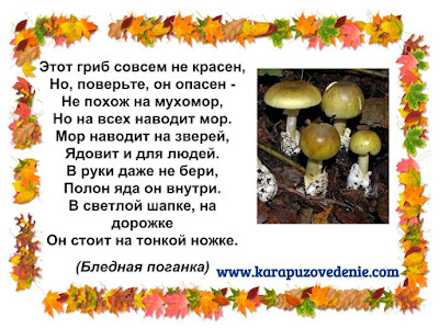 загадки про грибы бледные поганки для детей с ответами в картинках