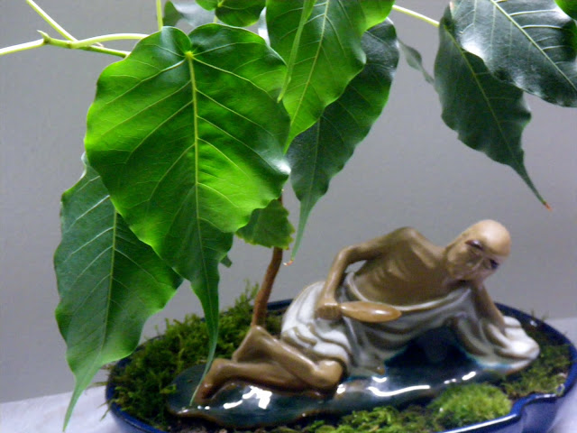 Buddha meditating under Ficus Religiosa  (Boo tree)  Bonsai