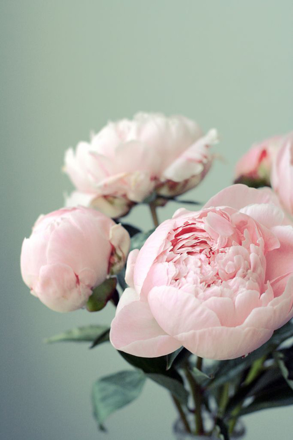 Lovely clusters the pretty blog lovelyclustersblog friday friday flower pink peonies mightylinksfo