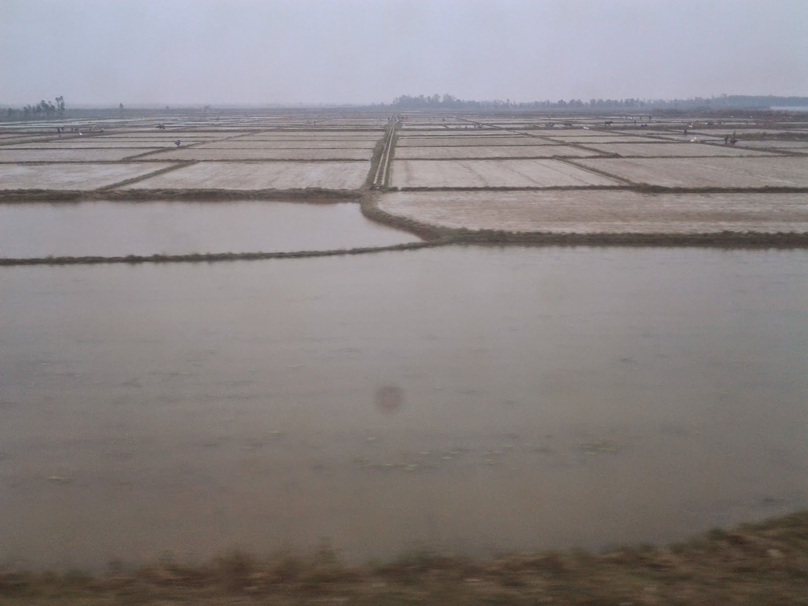 Vietnam holiday through the train window: paddy fields
