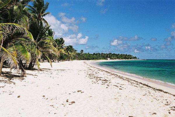 Karibischer Traumstrand unter Palmen auf Guadeloupe