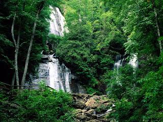 Cara Mencari Air Diwaktu Kecemasan Di Hutan