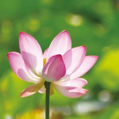 一心不二心,眾生共一心,要知心來處,直向心中行。心是蓮花心,身是蓮花瓣,一塵不染心,身心自清淨。心淨心自明,心明見自性,自性本天生,何必向外尋。~禪宗第八十五代宗師 悟覺妙天禪師