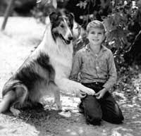διάσημα σκυλιά