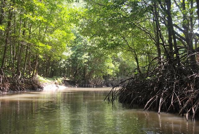 Découvrez la forêt de mangroves de Vàm Sát dans le Sud du Vietnam