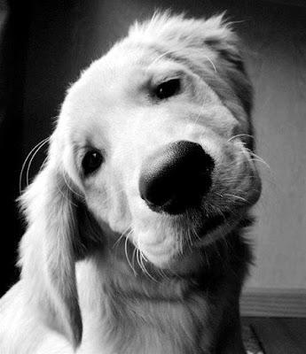 Cães e outros animais possuem autoconsciência afirma estudo