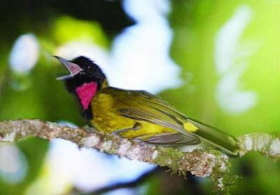 Garugiwa, Burung Arwah Danau Kelimutu