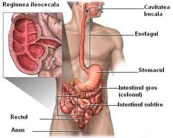 Ileita terminala (boala Crohn)