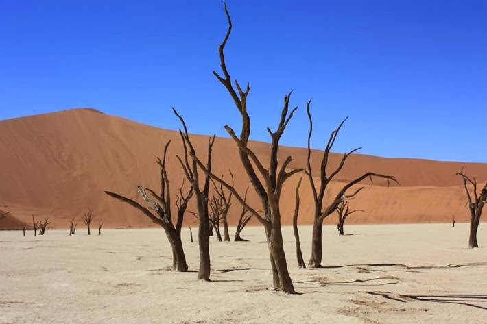 Dedvley : Namib cemetery 900-year-old dead trees.