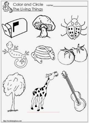 Living Things Worksheet Printable