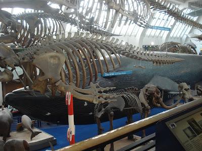 Dicas sobre o Natural History Museum em Londres