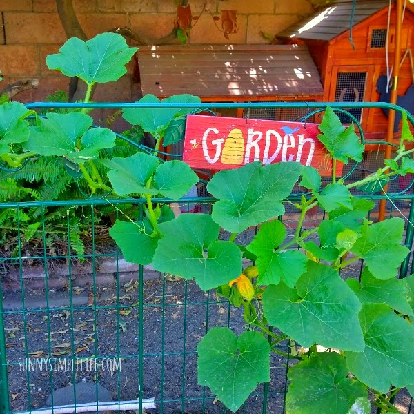 garden along coop fence, week in the garden and coop