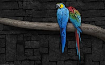 HD LOVE BIRDS.