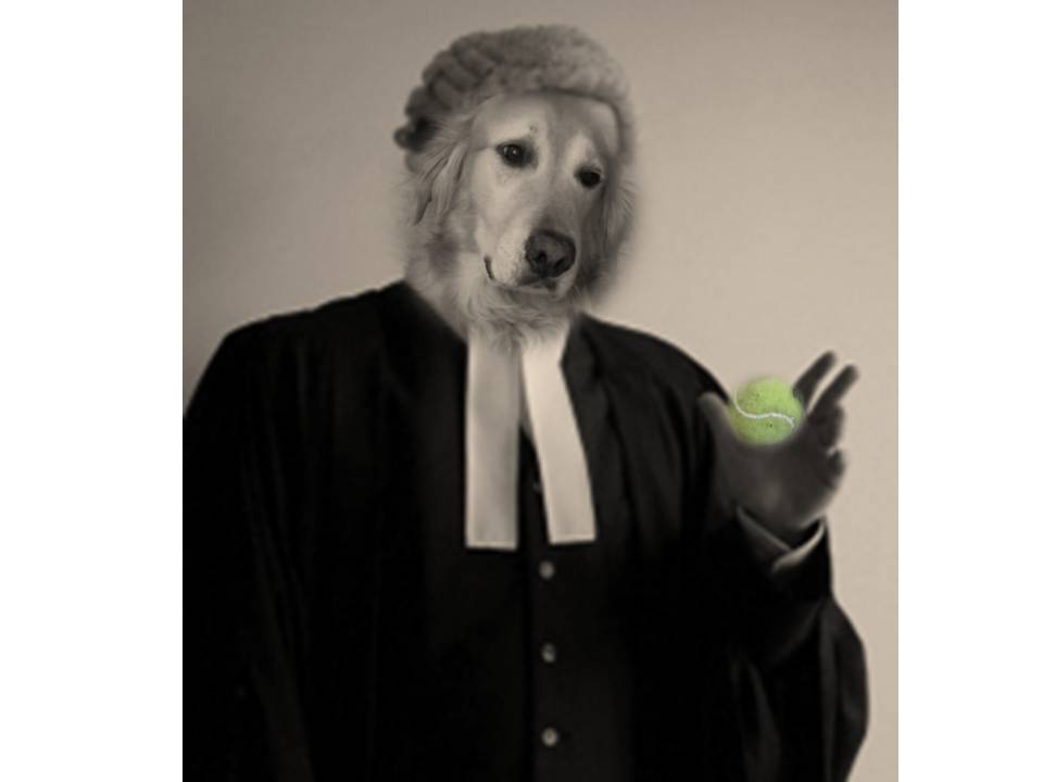 how to become a barrister uk