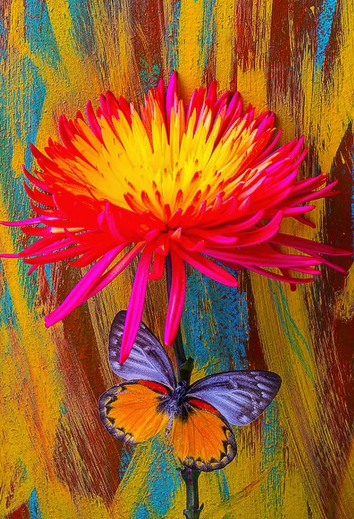 Cuadros Pinturas Oleos Imagenes De Flores Con Mariposas