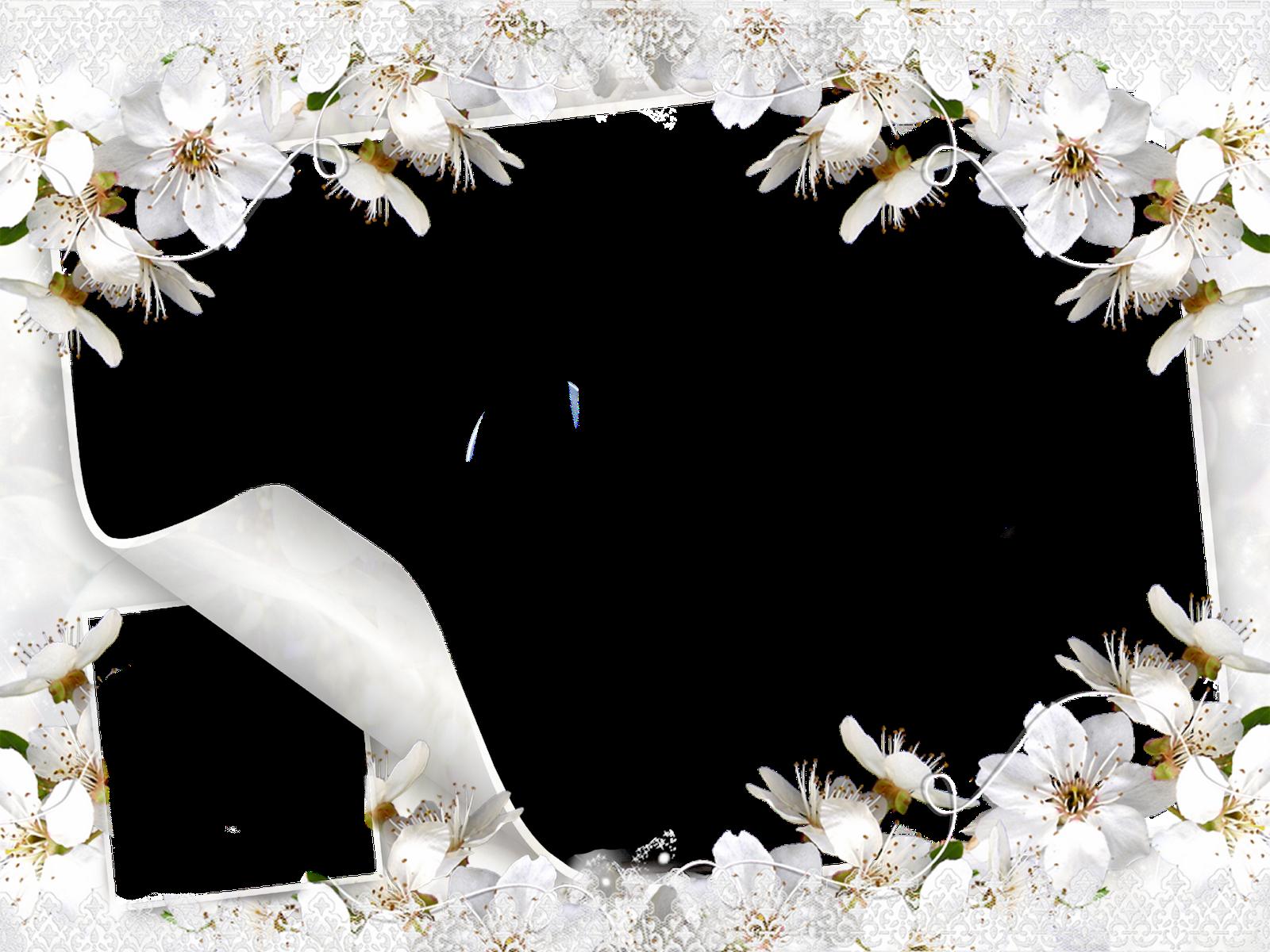 Imagenes De Ramos De Rosas Blancas - descargar imagen de ramo de rosas blancas Resultados