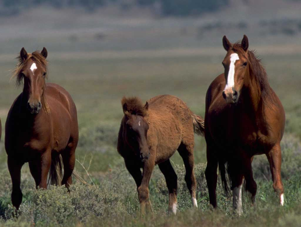 wild horses racing wallpaper - photo #12