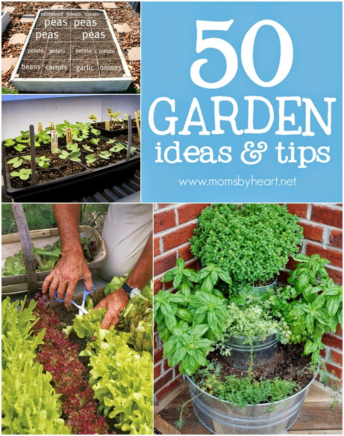 50 Gardening Ideas & Tips