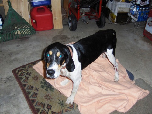animal as assistance to disabled K9 companions for the disabled: the last few links lead to information on how a qualifying individual can apply for an assistance animal.