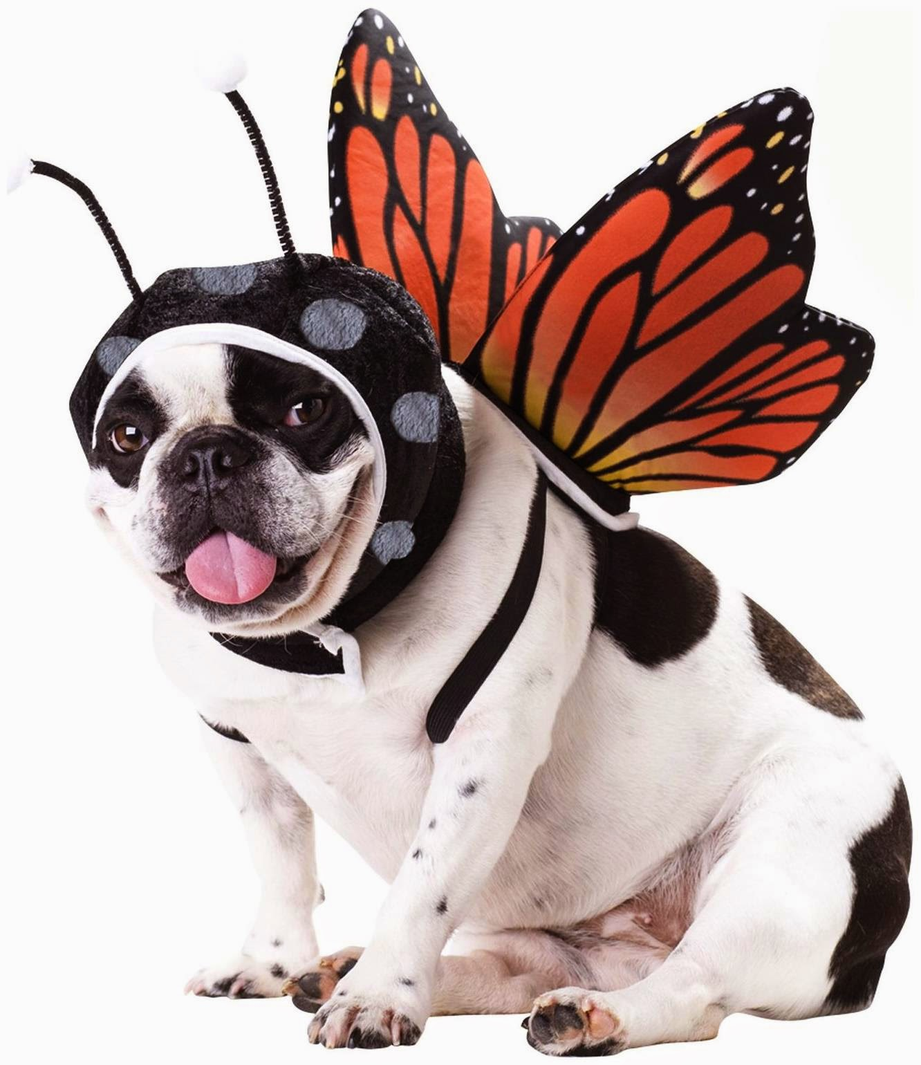 Dress up your pet day - Butterfly Pet Costume
