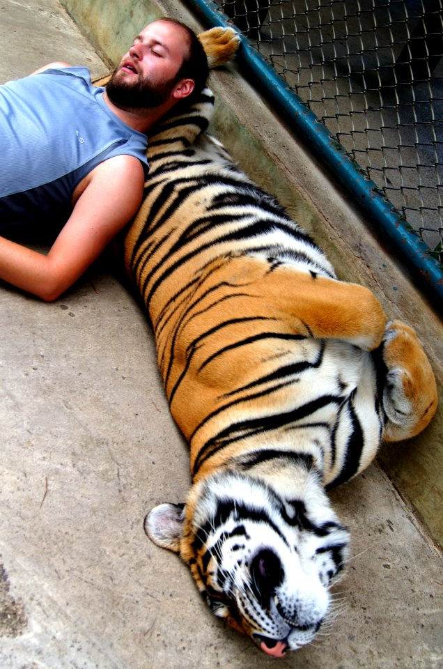 funny animal pictures, man sleeps with tiger