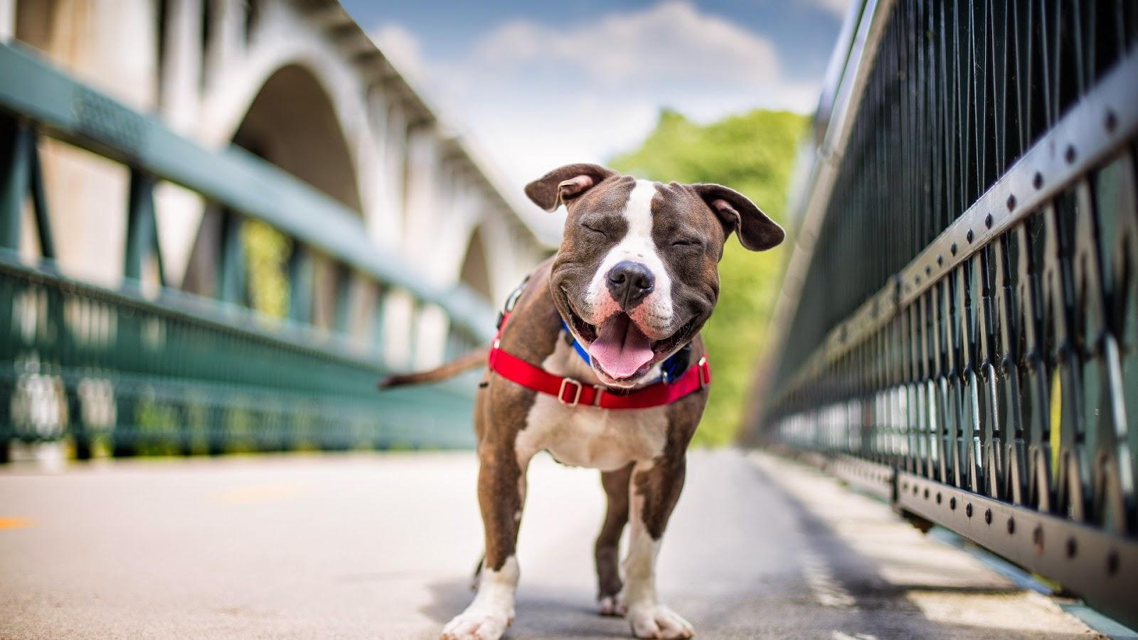 Cómo entender el lenguaje corporal de tu perro: cuidados y nombres para tu mascota. Perro feliz