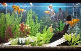 O aquario