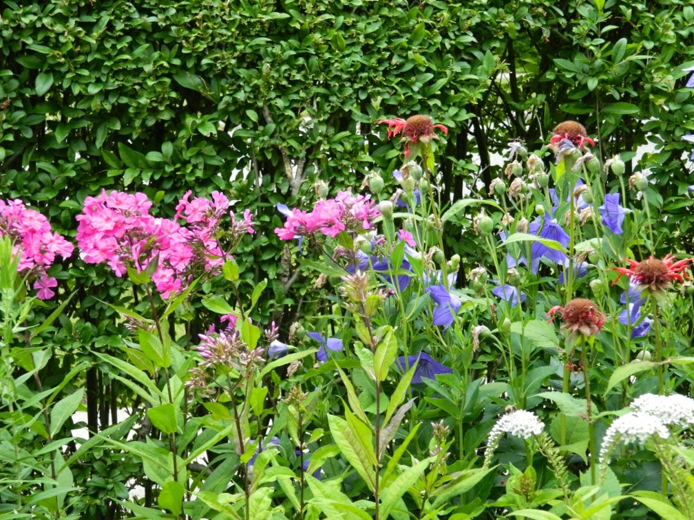 Summer blooms by garden muses-not another Toronto gardening blog