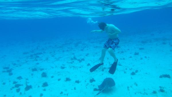 grand cayman snorkeling, snorkeling photos