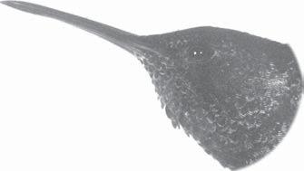 Burung kolibri mempunyai paruhberbentuk panjang dan