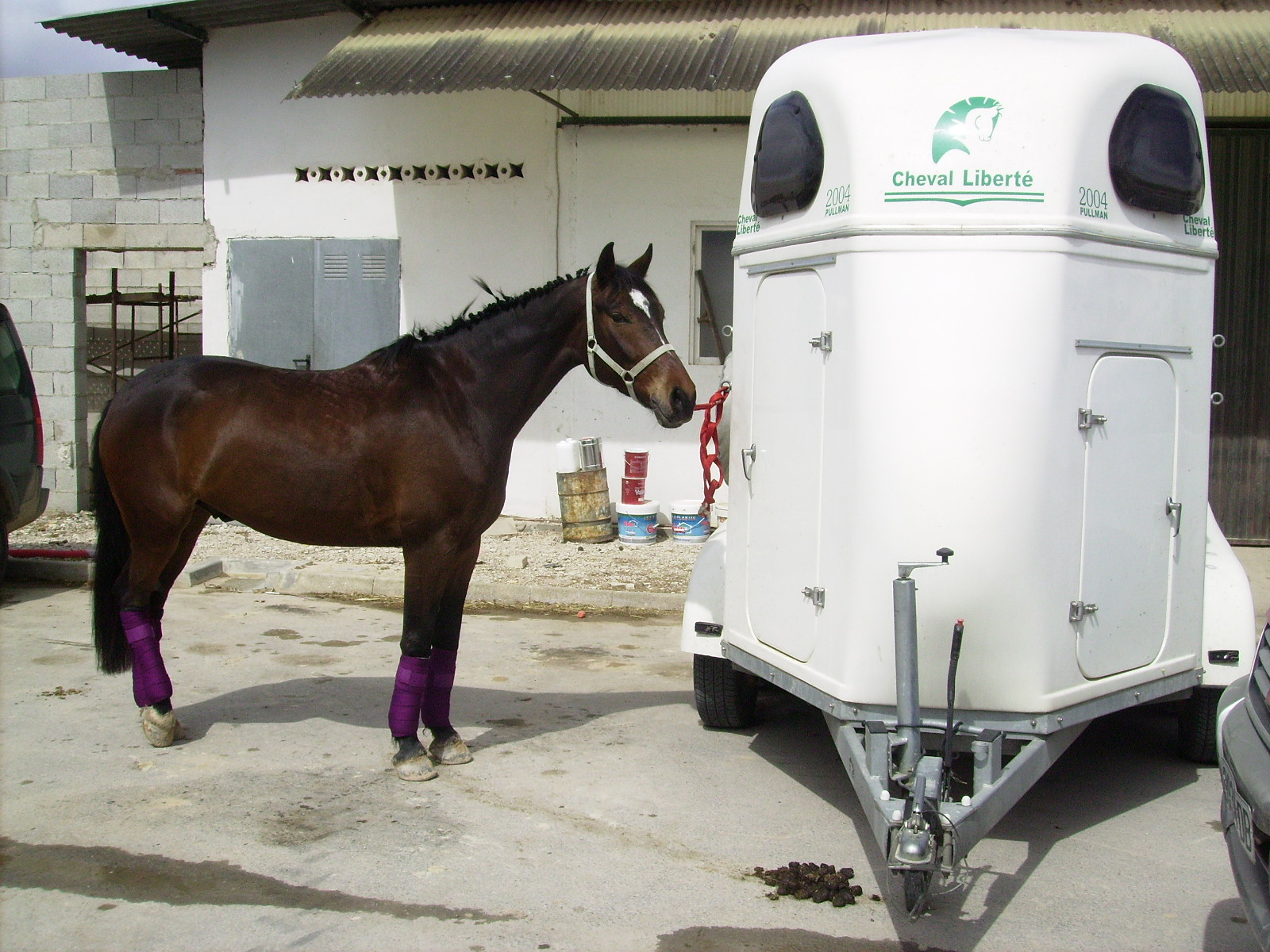 Dressage caballo nivel iii de doma - Caballo silla frances ...