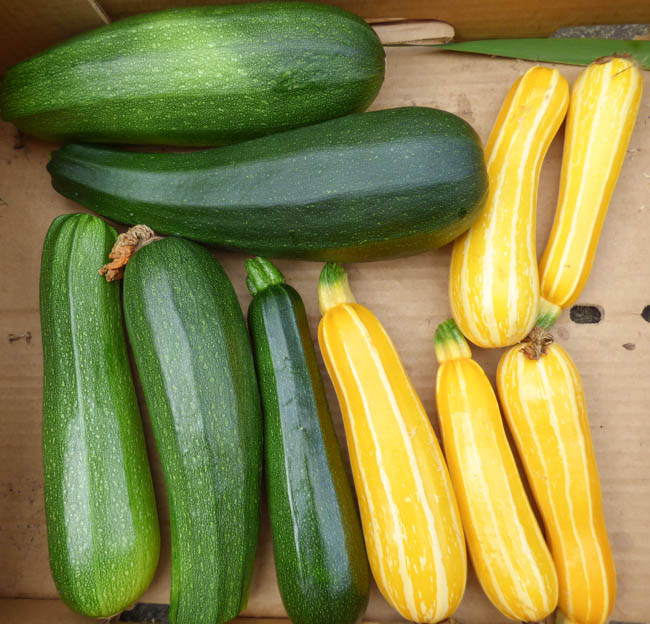 Courgettes recipes