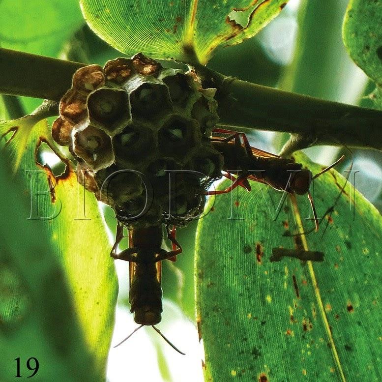 Bộ sưu tập côn trùng 2 - Page 12 New