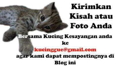 kirimkan kisah dan foto anda bersama kucing anda
