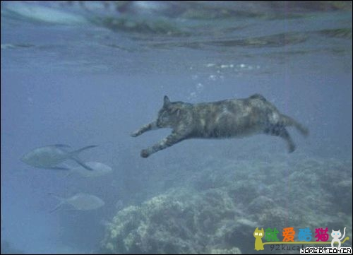 funny cat swimming picture gallery online news icon