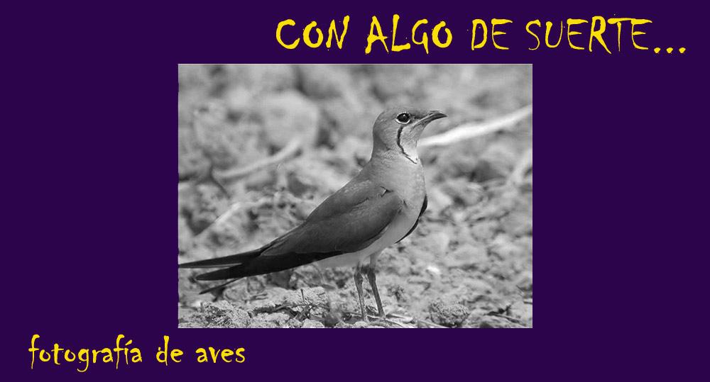 CON ALGO DE SUERTE