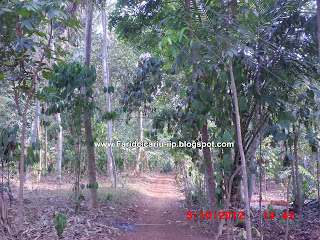 Pedesaan sawah yang indah Kampung cicariu desa ciroyom kecamatan cipeundeuy bandung barat